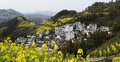 Village on a hillside yellow rape and winding mountain path in the s shaped Royalty Free Stock Photo