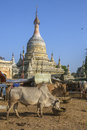 Village life ancient city bagan myanmar burma Royalty Free Stock Images