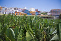 Village near big banana plantation at La Palma Royalty Free Stock Photography