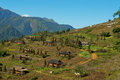 Village near sapa city vietnam an aerial view of Stock Photos