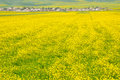 Village in rape seed field Royalty Free Stock Photo