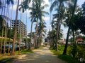 Village road methupatha with coconuts tree Stock Image