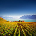 Village and vineyards in Lavaux Royalty Free Stock Photo