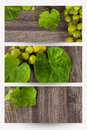 Vine banners Royalty Free Stock Photo