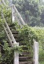 Vine covered stairs a set of in vines Royalty Free Stock Image