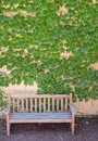 Vine covered wall and a sidewalk bench Royalty Free Stock Photo