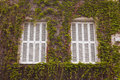 Vine covered windows a typical pair of french and shutters in tours france Stock Photo