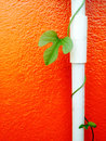 Vine green leaf with white pipe on orange wall Royalty Free Stock Photo