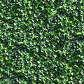 Vine and Leaves on a Wall Seamless Tile Royalty Free Stock Photo