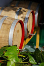 Vine leaves with wine casks in the background Stock Image