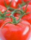 Vine tomatoes. Royalty Free Stock Photo