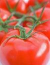 Vine tomatoes. Royalty Free Stock Photo