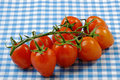 Vine tomatoes covered moisture blue gingham tablecloth Royalty Free Stock Images