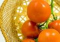 Vine Tomatos Royalty Free Stock Photo
