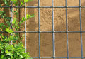 Vine on trellis arbor stucco background metal with brown Stock Photography