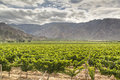 Vine yards in cafayate argentina Royalty Free Stock Photos