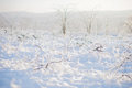 Vinery in ice and snow bushes of Royalty Free Stock Photo