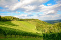 Vines in a vineyard in autumn - Wine grapes before harvest, Styria Austria Royalty Free Stock Photo