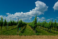 A vineyard. Stock Image