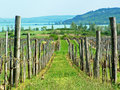 Vineyard Royalty Free Stock Photos