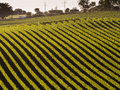 Vineyard in adelaide hills car passing by a Royalty Free Stock Photos