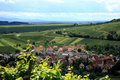 Vineyard, Alsace, France Royalty Free Stock Image