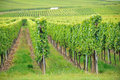 Vineyard at alsace france autumn Royalty Free Stock Photo