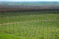 Vineyard and apple orchard with modern sistem for irrigation nets against hail Stock Photography