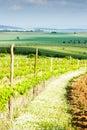 Vineyard in Austria Royalty Free Stock Photo