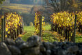 Vineyard in autumn Saint Emilion, Bordeaux Royalty Free Stock Photo