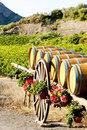Vineyard with barrels Stock Photo