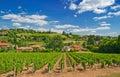 Vineyard in Beaujolais region, France Royalty Free Stock Photo