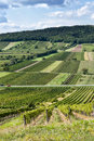 Vineyard beautiful rows of viticulture in austria Stock Image
