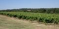 Vineyard bordeaux vineyard france beautiful under blue sky Stock Photography