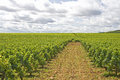 Vineyard in Bourgogne, Burgundy Stock Images