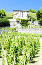 Vineyard of Chateau Grillet Royalty Free Stock Image