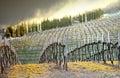 Vineyard - Chianti, Italy Royalty Free Stock Photo