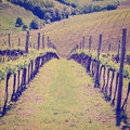 Vineyard in the chianti region instagram effect Stock Photos