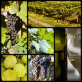 Vineyard collage Royalty Free Stock Photos