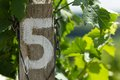 Vineyard - detail row number five Royalty Free Stock Photo