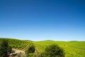 Vineyard field Royalty Free Stock Photo