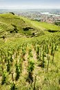 Vineyard in France Royalty Free Stock Photography