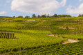 Vineyard in france tourist train a on a sunny day Royalty Free Stock Image