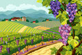 Vineyard and grapes bunches rural landscape with Stock Photography