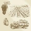Vineyard, harvest, farm