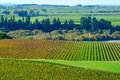 Vineyard in Hawkes Bay Stock Photography