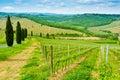 Vineyard hill road lined cypresses sunny day near castelfiorentino tuscany italy Royalty Free Stock Photos