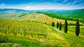 Vineyard hills and cypresses on a hill beside a road lined by on a sunny day near castelfiorentino tuscany italy Stock Image