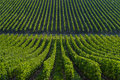 Vineyard landscape bordeaux viney south west of france Royalty Free Stock Images