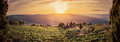 Vineyard landscape panorama in Tuscany, Italy. Wine farm at sunset Royalty Free Stock Photo